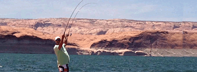 Lake Powell Fish Report – July 11, 2018