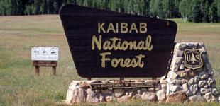 Kaibab National Forest: Stage 1 Fire Restrictions Continue