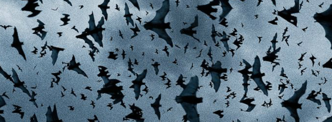 Bring the Kids to the 3rd Annual Bat Festival SATURDAY