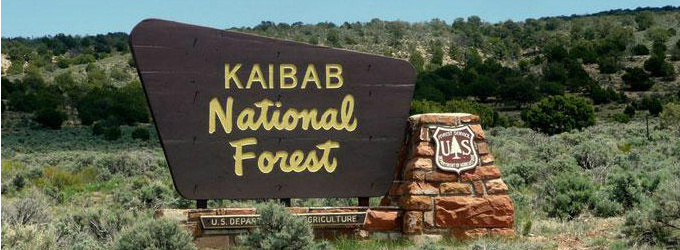 Apply to Work on the Kaibab National Forest