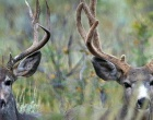 Utah Hunters Big Game Permits
