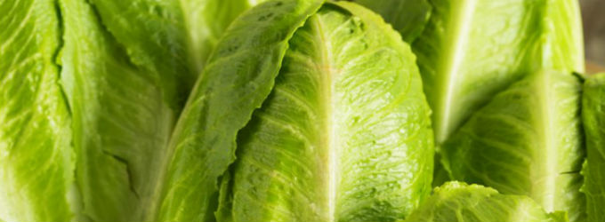 Romaine From Yuma Linked to E-Coli