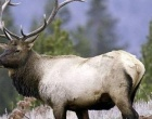 Utah Hunters: Big Game Application Period Opens Jan. 30